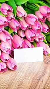 Картинка Тюльпаны Розовые Шаблон поздравительной открытки Цветы