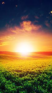 Картинки Пейзаж Рассветы и закаты Поля Небо Солнце Природа