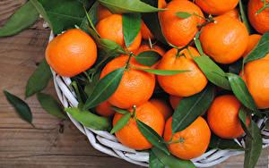 Картинки Цитрусовые Мандарины Крупным планом Листья Продукты питания