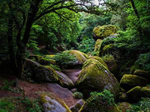 Фотография Франция Лес Камни Деревья Мох Huelgoat Forest Природа