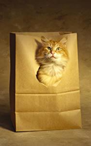 Картинка Кошки Рыжая Морда