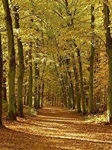 Картинки Осень Леса Дерева Лист