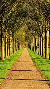 Картинки Дороги Лето Аллеи Траве Деревьев