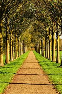 Картинки Дороги Лето Аллея Трава Деревья