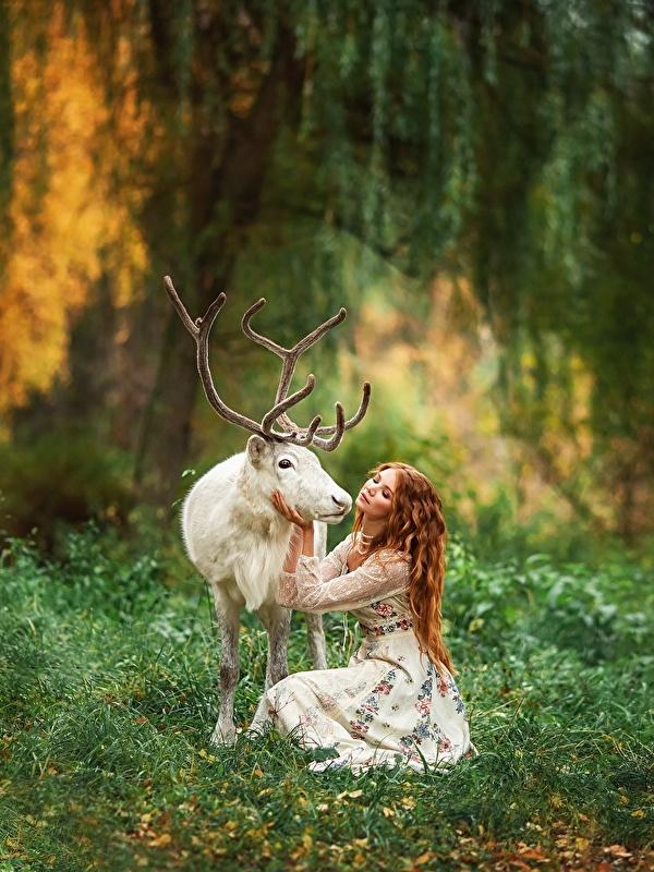 Фотографии Олени Рога Размытый фон белая молодая женщина животное 600x800 для мобильного телефона с рогами боке Белый белые белых девушка Девушки молодые женщины Животные