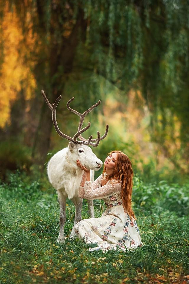Фотографии Олени Рога Размытый фон белая молодая женщина животное 640x960 для мобильного телефона с рогами боке Белый белые белых девушка Девушки молодые женщины Животные
