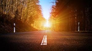 Фото Дороги Леса Асфальт Деревья Лучи света Природа