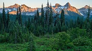 Картинки США Парки Гора Леса Ели Трава Mount Rainier National Park Природа