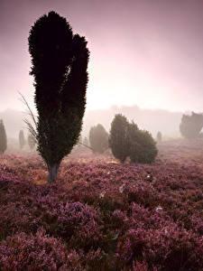 Фотографии Рассветы и закаты Поля Деревья Туман Heather Flowers
