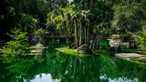 Фото Штаты Парки Пруд Мосты Флорида Пальмы Cedar Lakes Woods and Gardens Природа