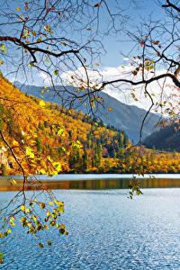Фото Китай Цзючжайгоу парк Парки Озеро Осенние Пейзаж Ветвь