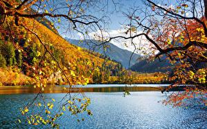 Фото Китай Цзючжайгоу парк Парки Озеро Осенние Пейзаж Ветки