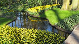 Картинки Голландия Парки Пруд Нарциссы Газон Keukenhof Природа
