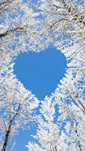 Обои Зима Деревьев Сердечко Снегу Ветка