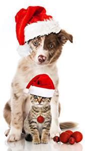 Картинка Рождество Собаки Коты Белый фон Шапки Котята 2 Животные