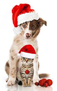 Картинка Рождество Собаки Коты Белый фон Шапки Котята 2