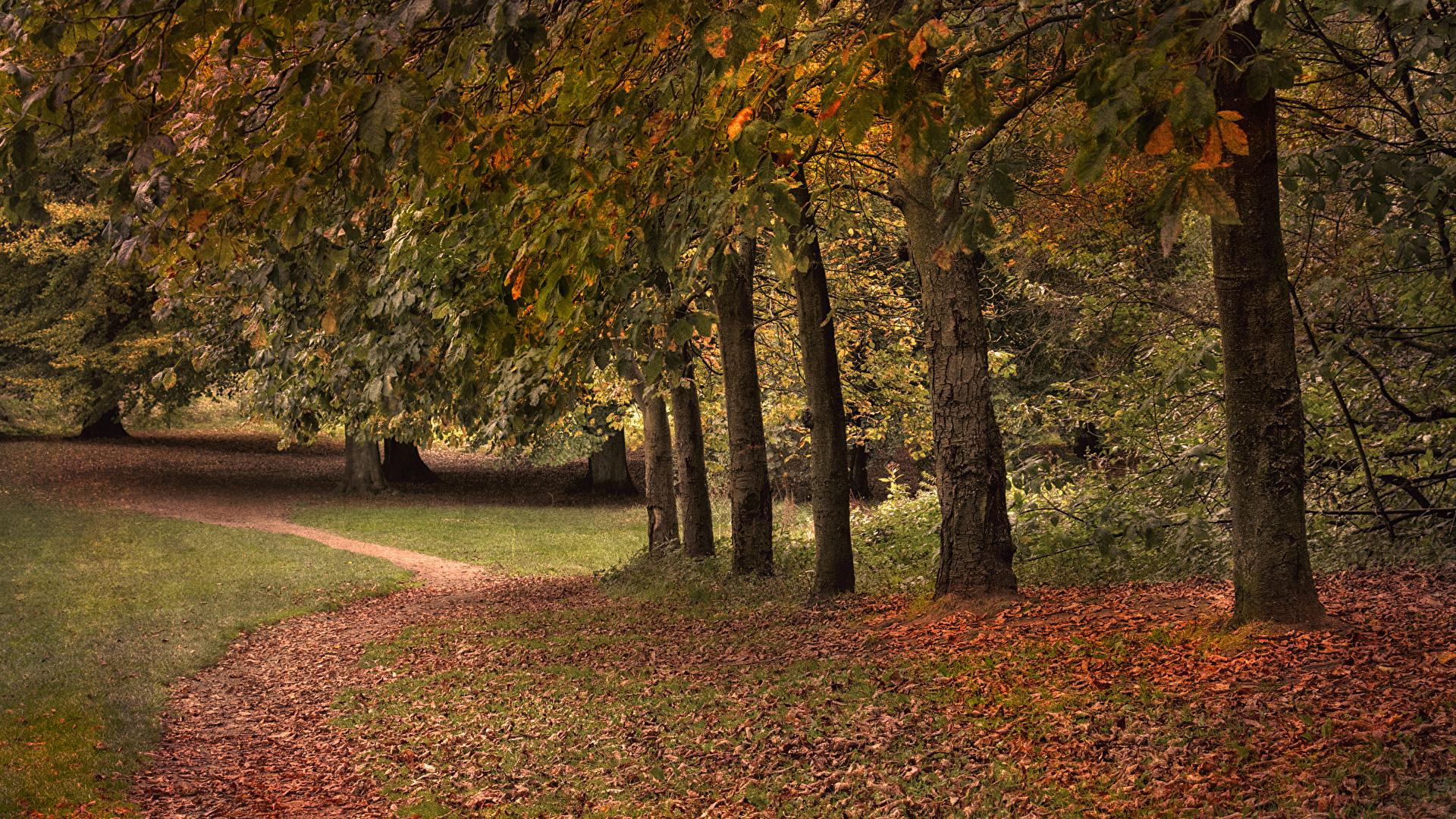 природа осень деревья тропа на телефон
