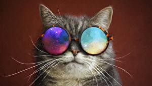 Милые Котики Обои На Рабочий Стол