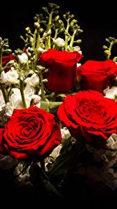 Картинка Букеты Роза Маттиола Черный фон Красный Цветы