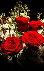 Картинка Букет Роза Маттиола Черный фон Красные Цветы