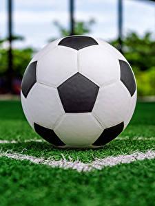 Фотография Футбол Газон Мяч Спорт