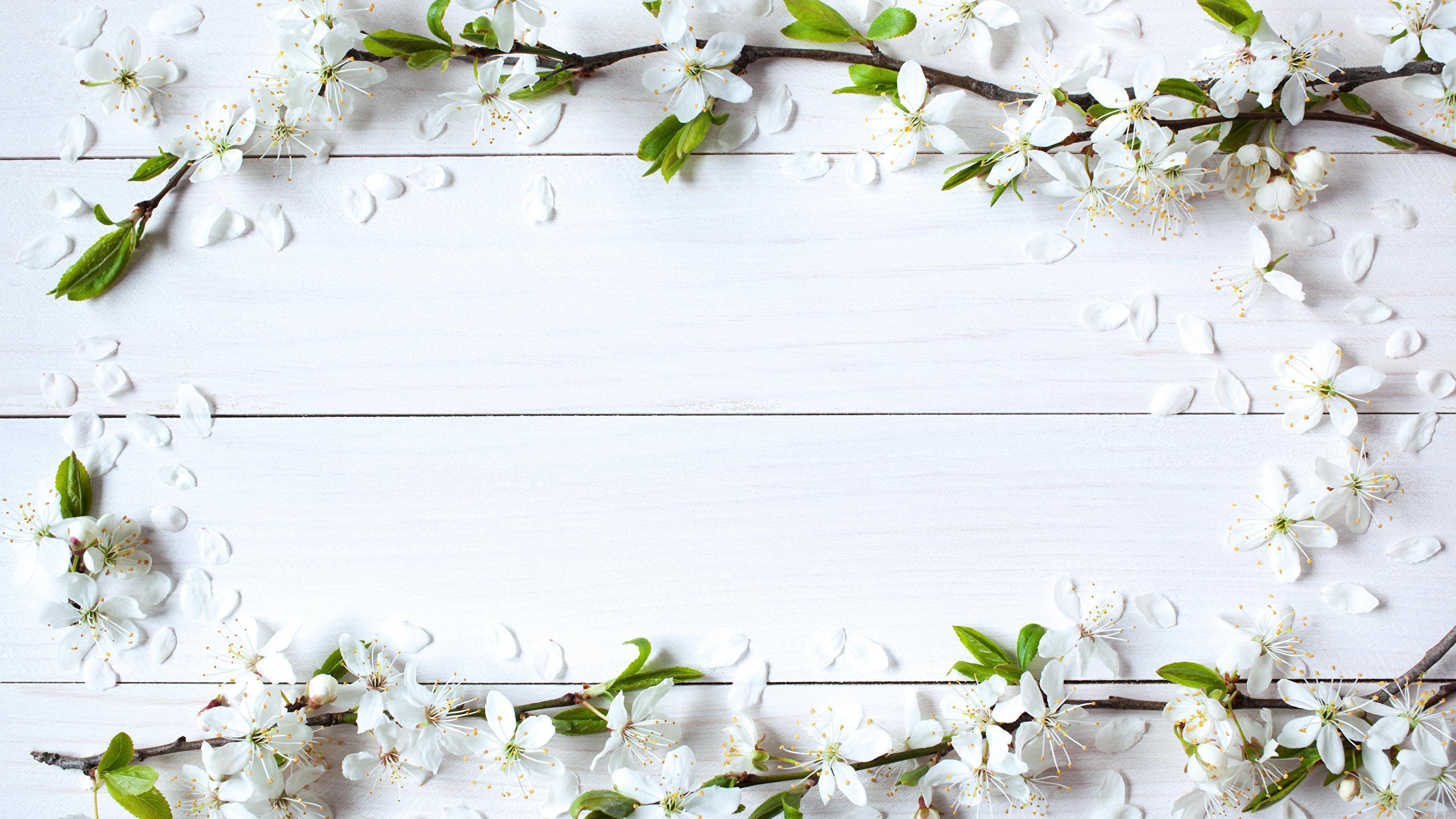 Wood Wallpaper Фотографии Цветы Шаблон поздравительной открытки Доски