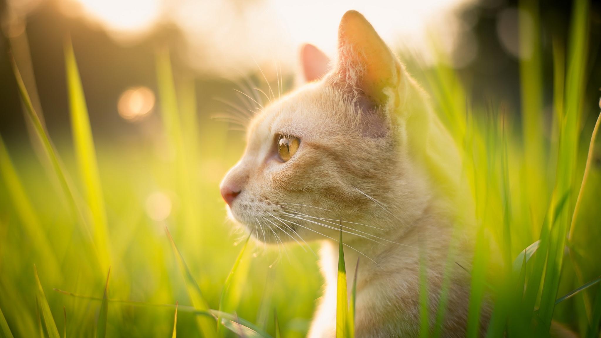 природа животные кот рыжий котенок в хорошем качестве