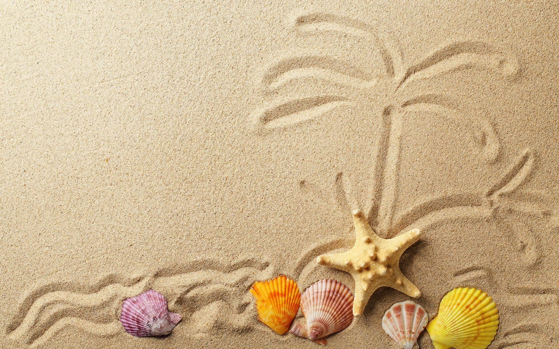 Картинки Морские звезды песка Ракушки 1920x1200 Песок песке