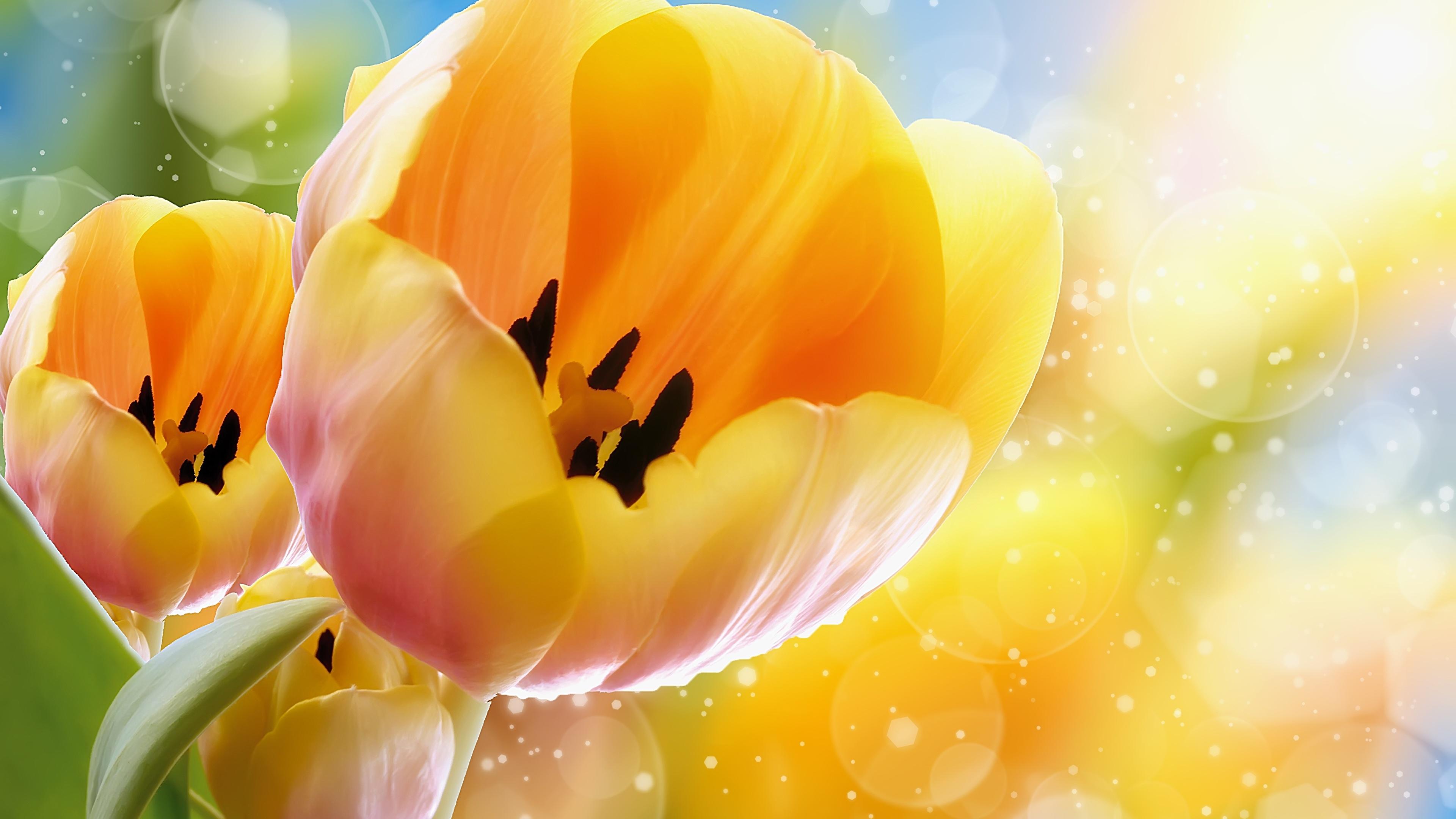 желто-оранжевые цветы без смс