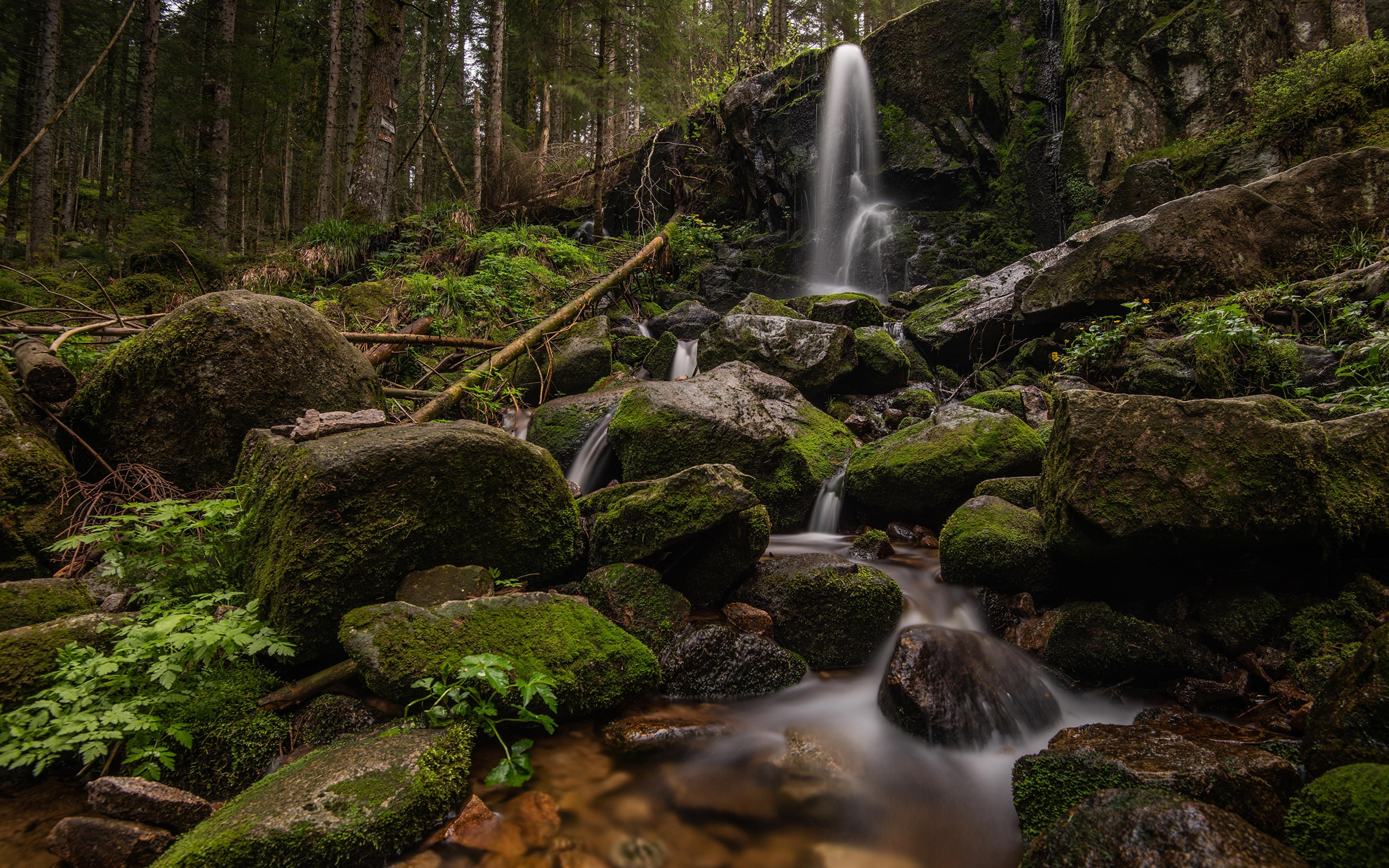 Фотографии Франция Cascade de Merelle скале Природа Водопады Леса Мох Камни 3840x2400 Утес скалы Скала мха мхом Камень
