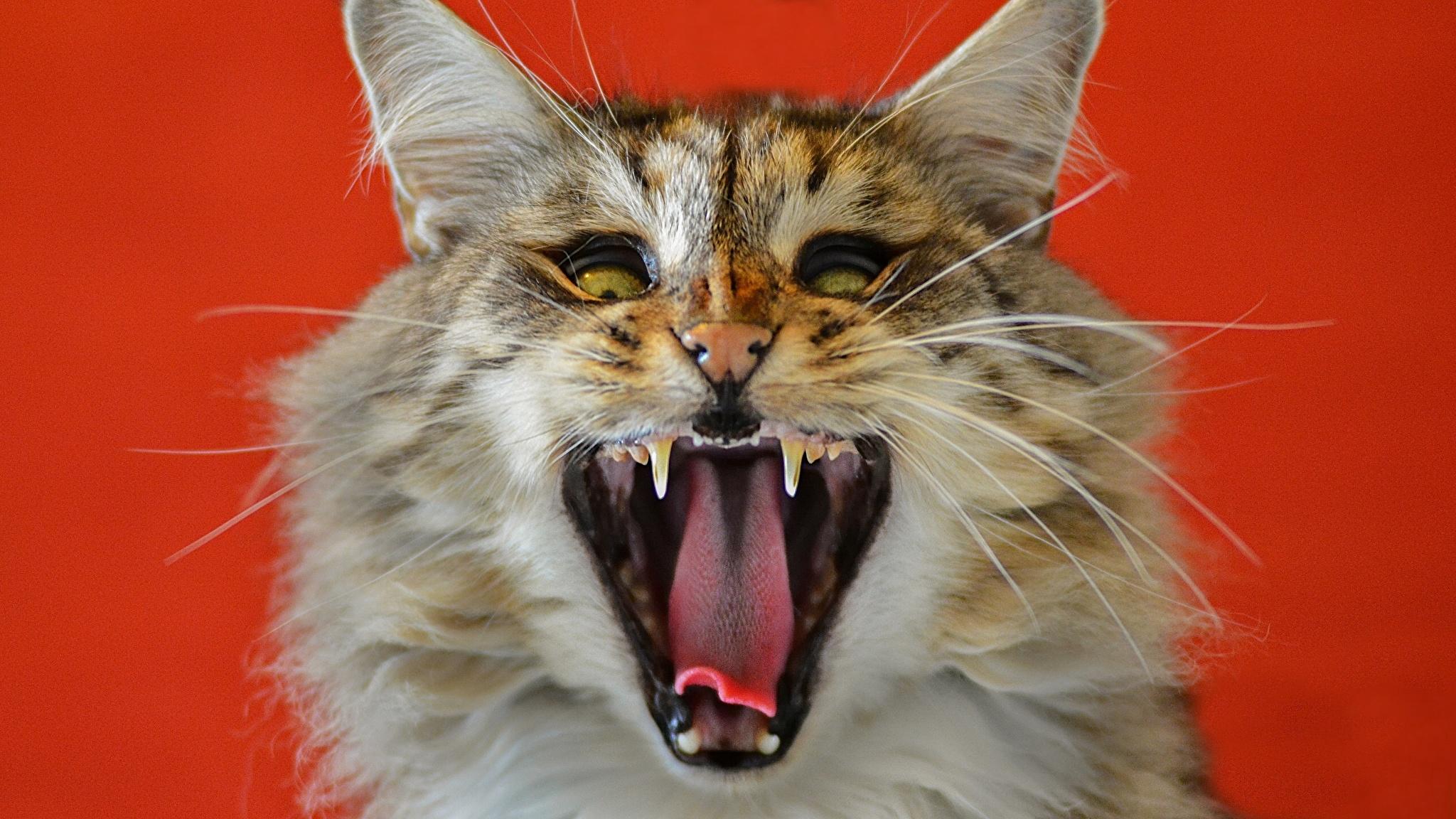 пасть кота на телефон