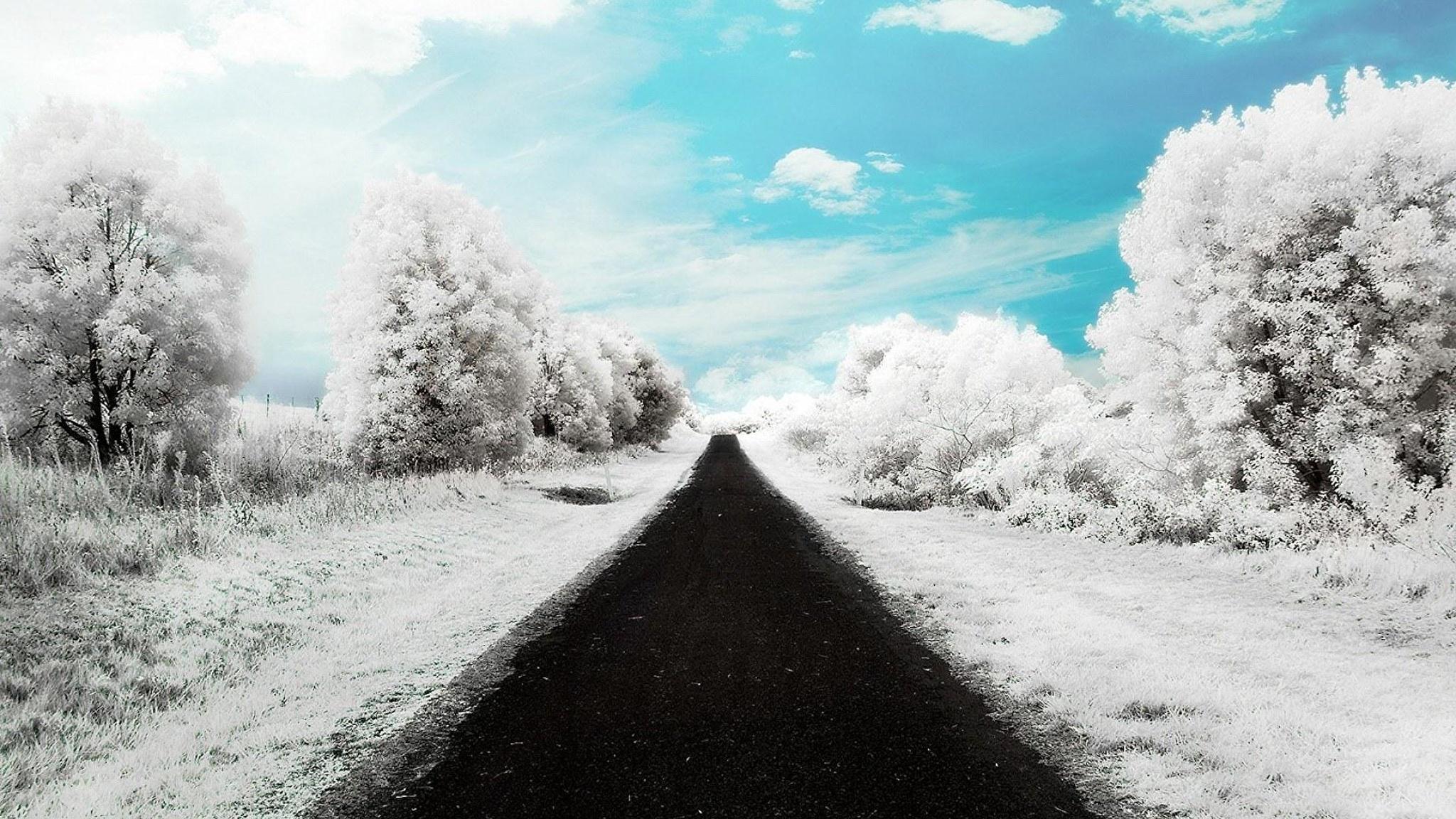 Дорога зимой снег ели небо бесплатно