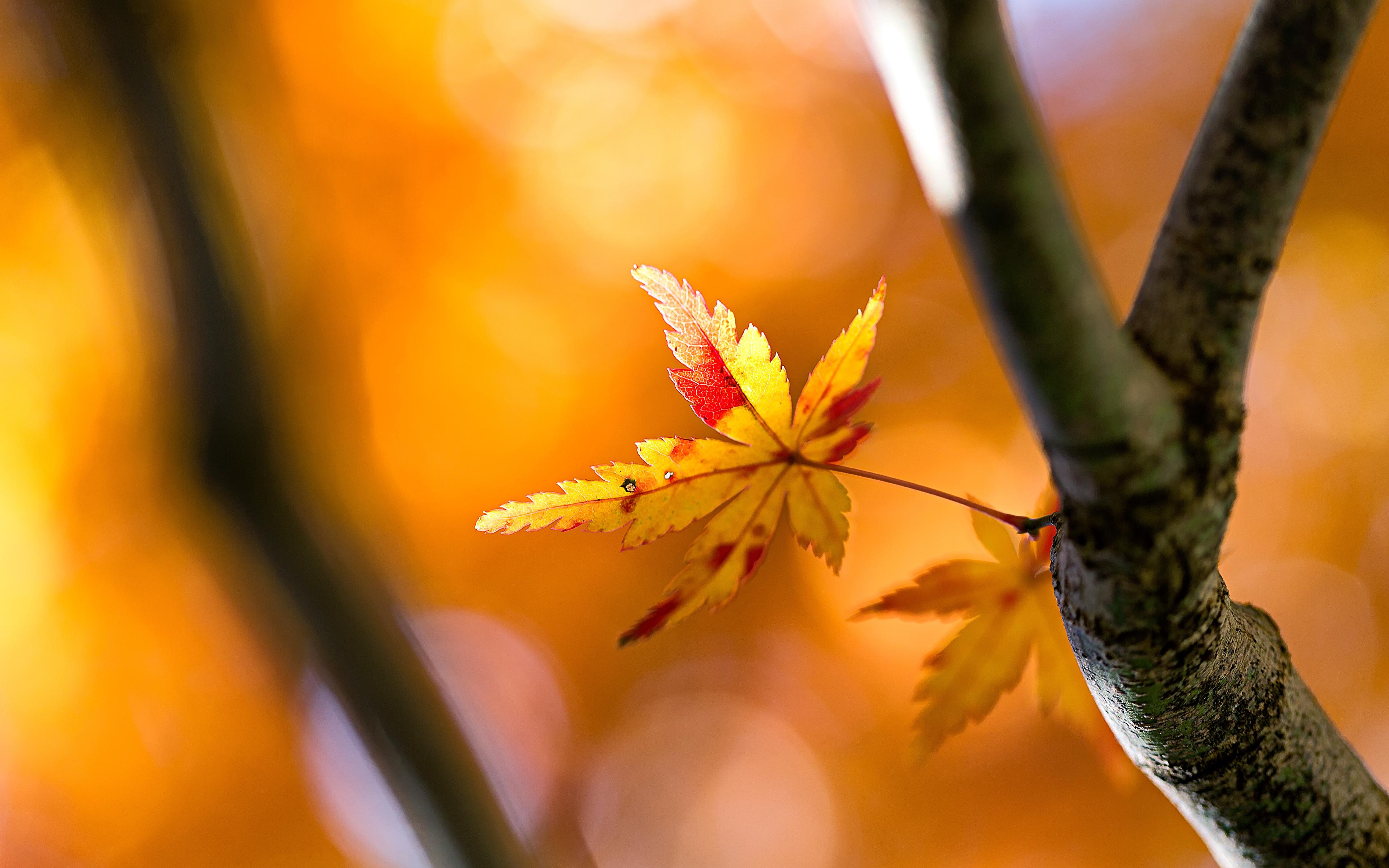 листья деревья песок ассоциация муж