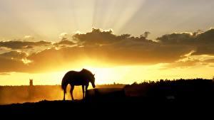 Фотография Лошади Силуэта Лучи света Животные