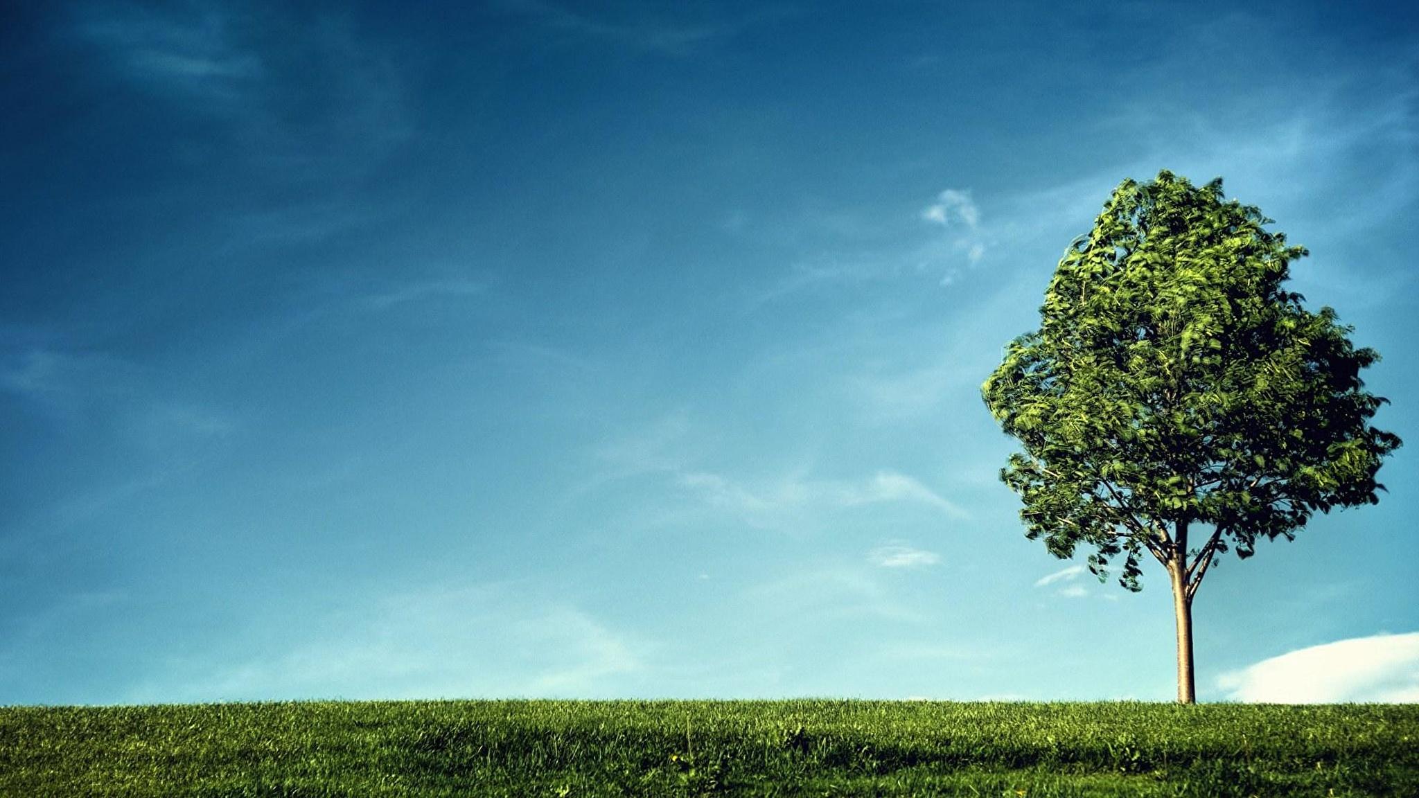 трава, небо, раскидистое дерево подборки