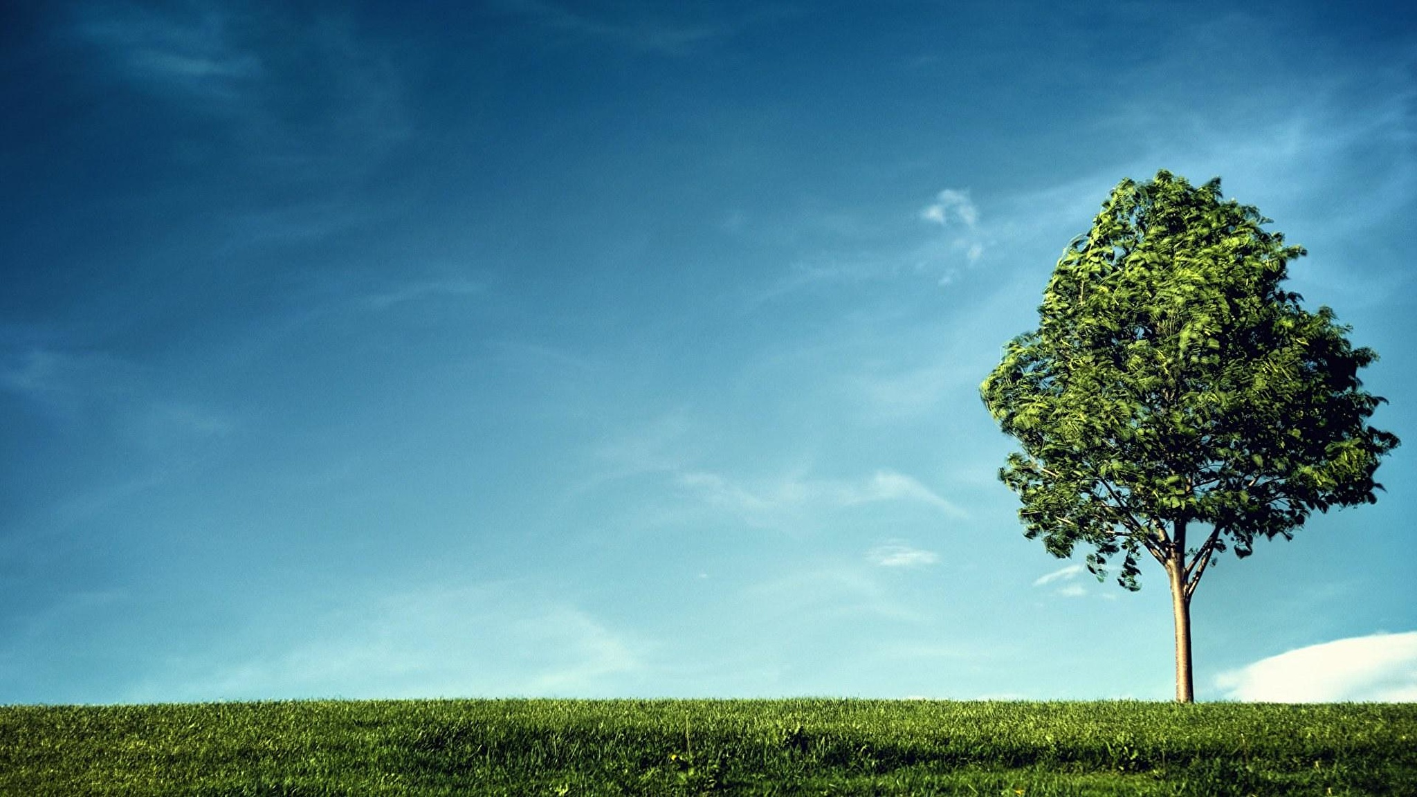 природа дерево трава пейзаж подборки