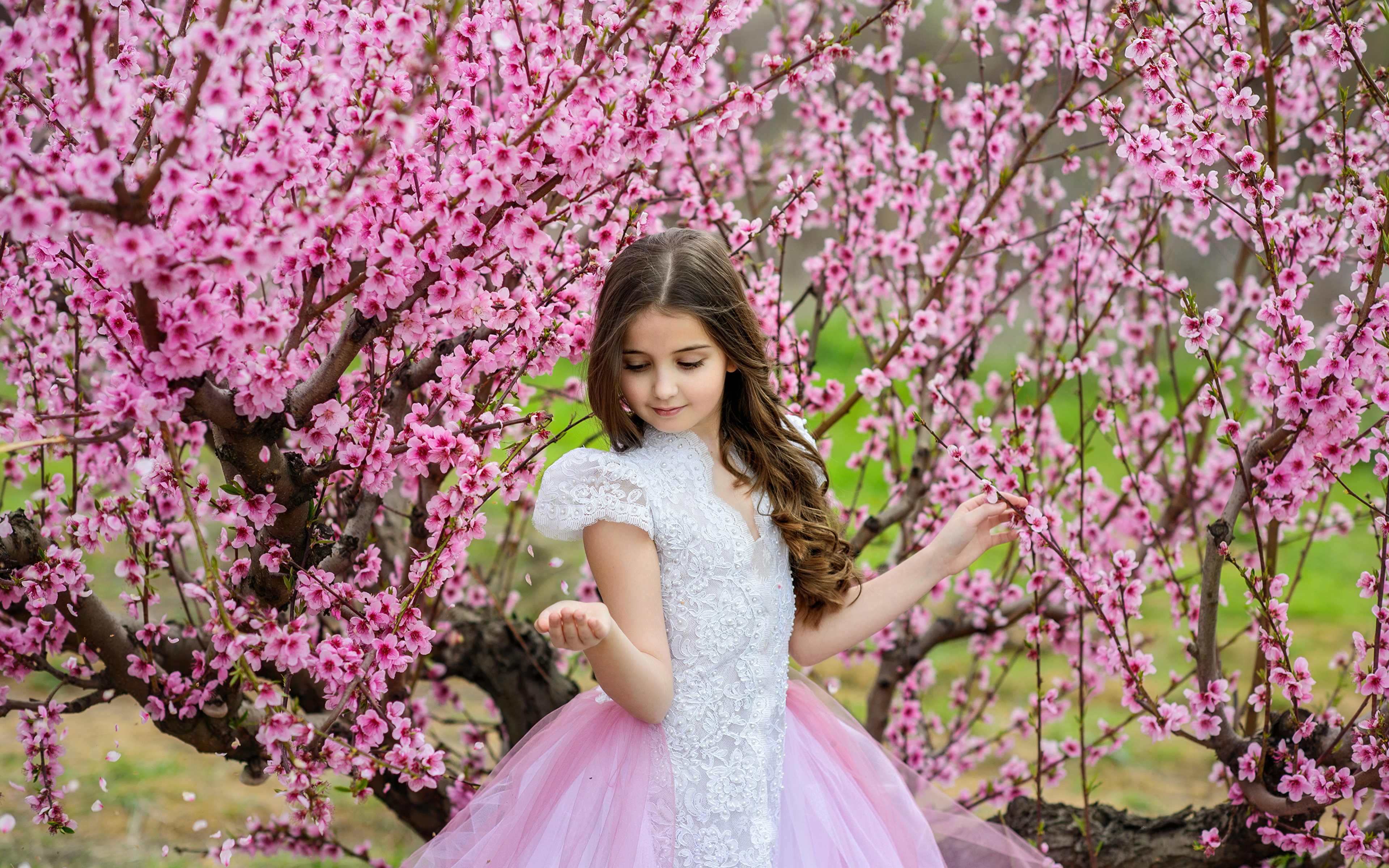 Фото Девочки ребёнок весенние Платье Цветущие деревья 3840x2400 девочка Дети Весна платья