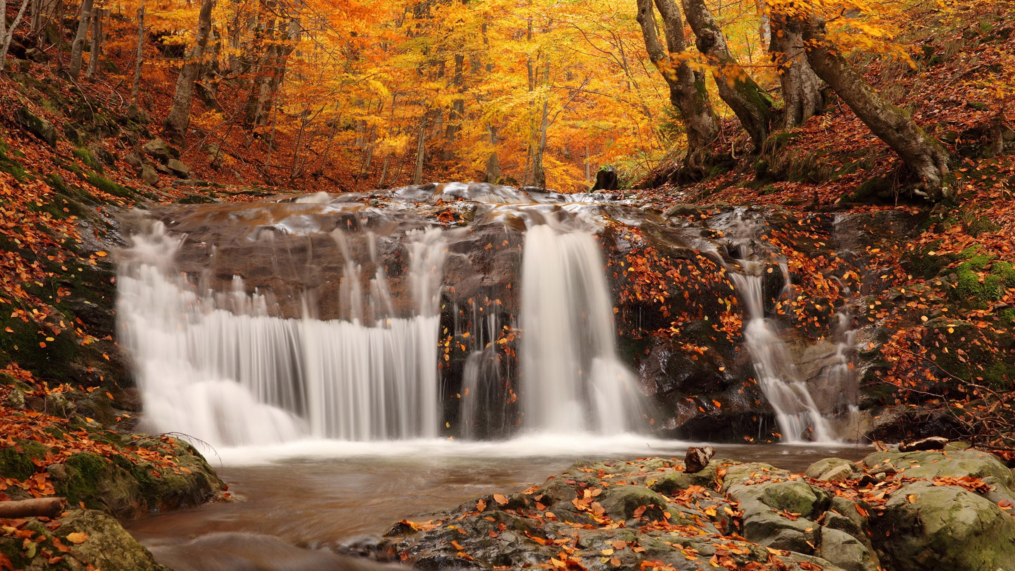 водопад лес осень онлайн