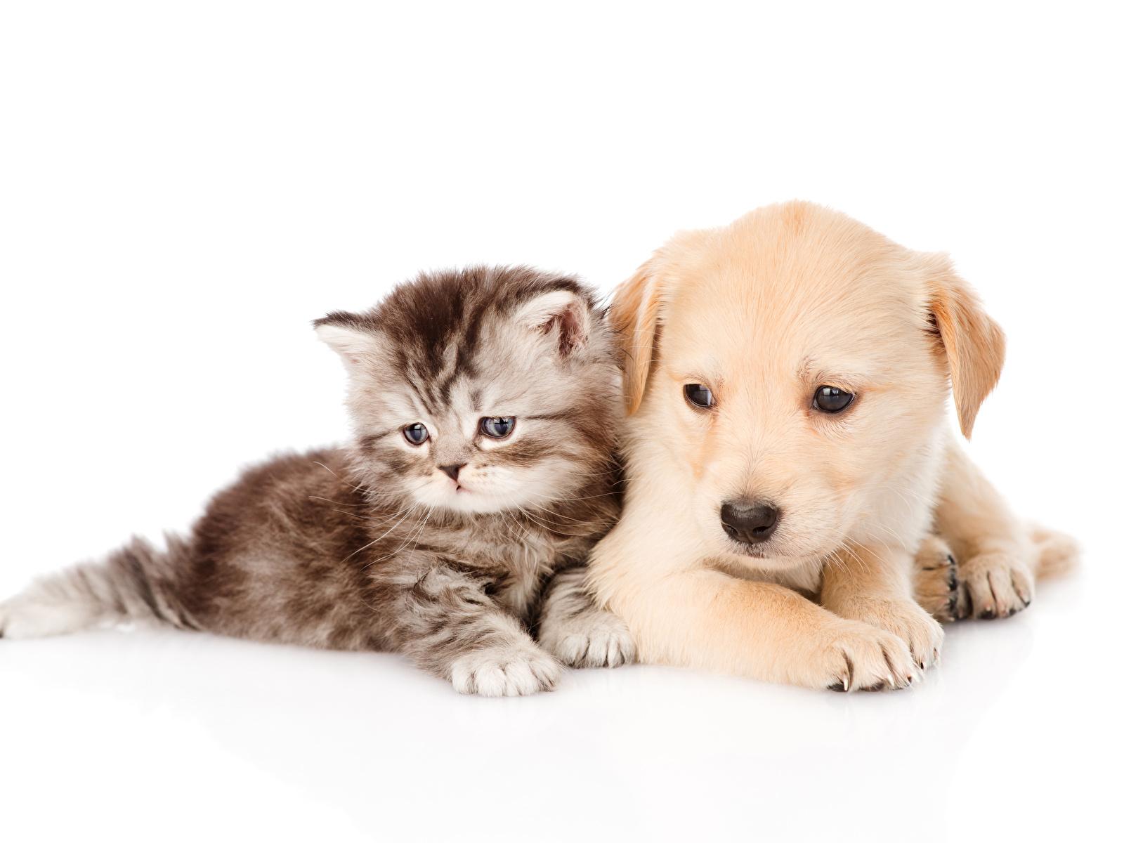 Обои кот, Собака, щенок. Собаки foto 7
