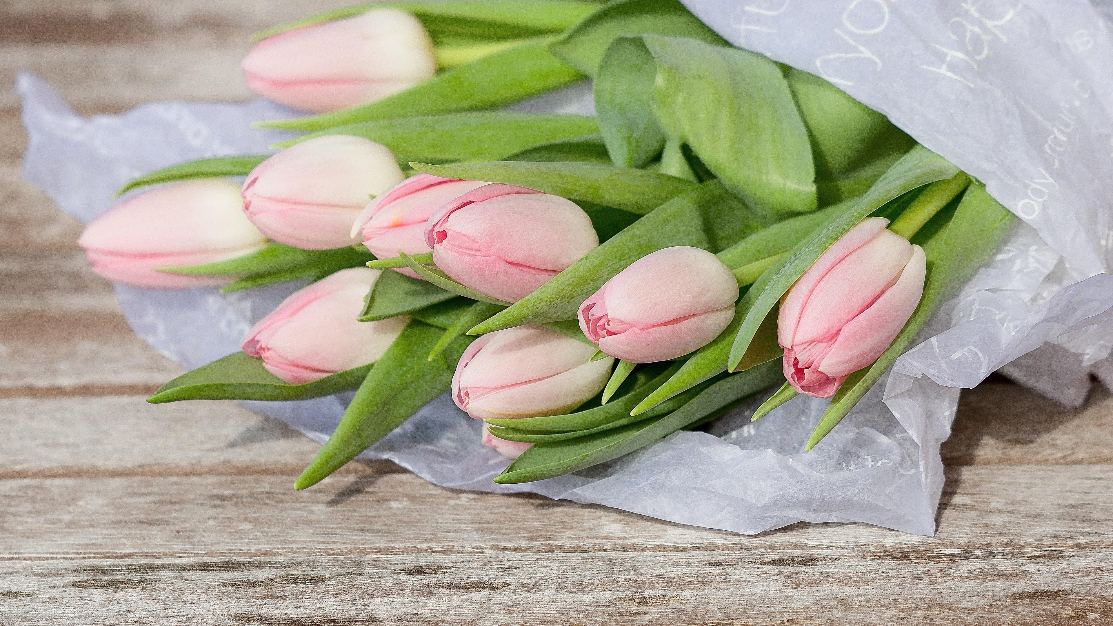 Обои для рабочего стола розовых тюльпан Цветы вблизи 3840x2160 Розовый розовые розовая Тюльпаны цветок Крупным планом