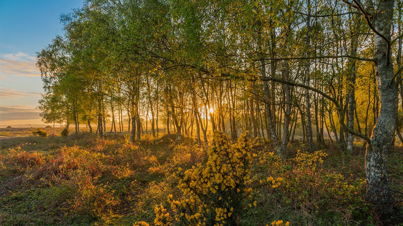 Картинки Англия Rockford New Forest National Park Природа осенние парк дерева 1366x768 Осень Парки дерево Деревья деревьев