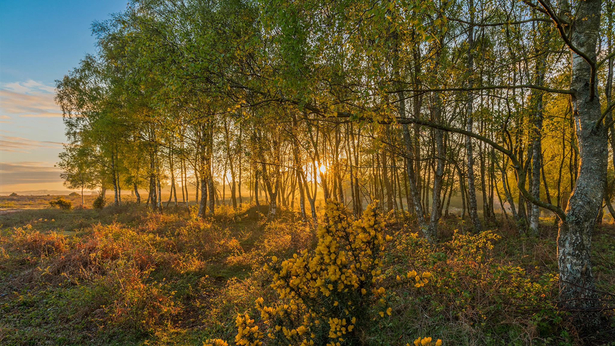 Картинки Англия Rockford New Forest National Park Природа осенние Парки Деревья 2048x1152 Осень