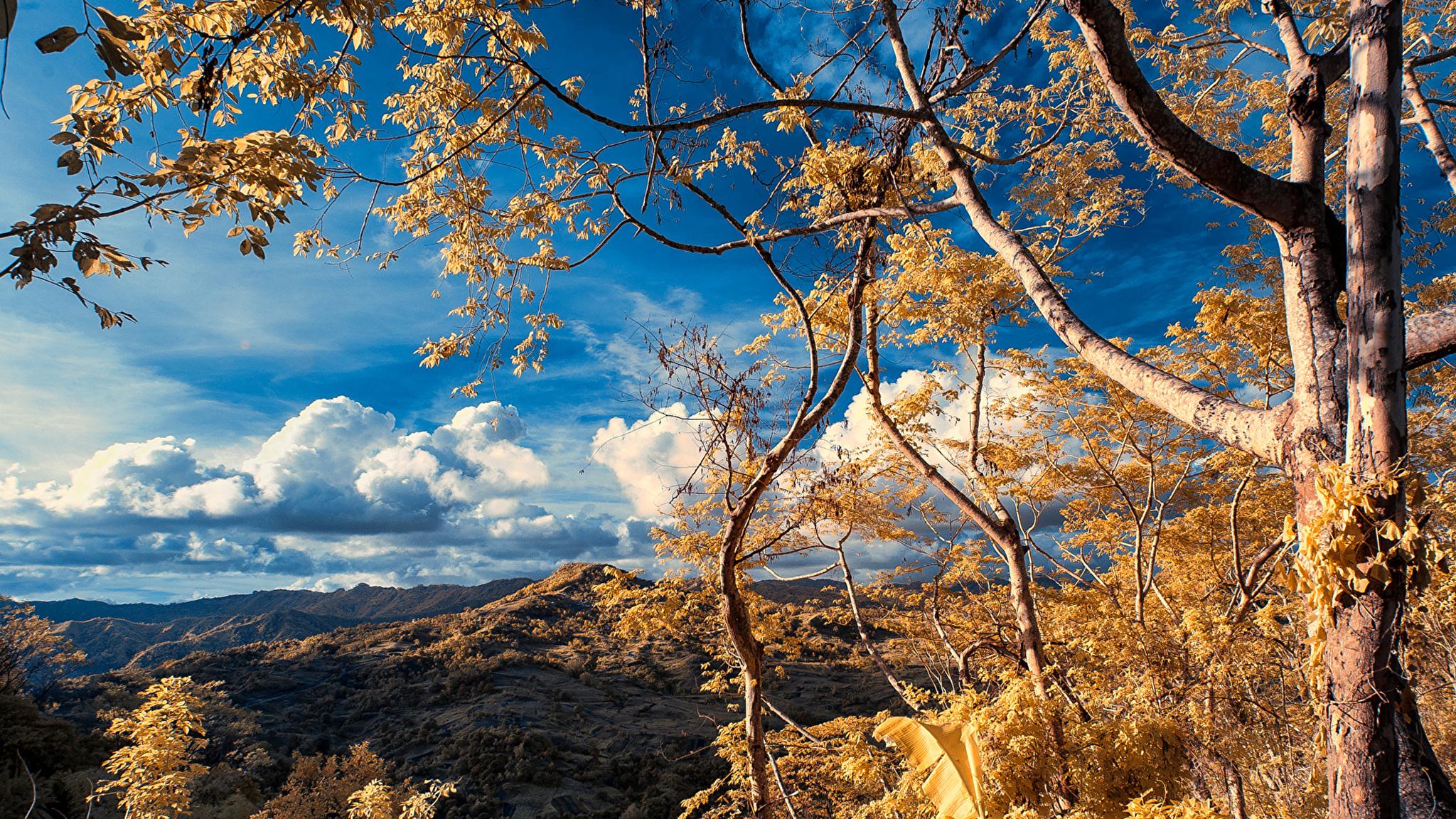 Ветки деревьев над безоблачным небом бесплатно