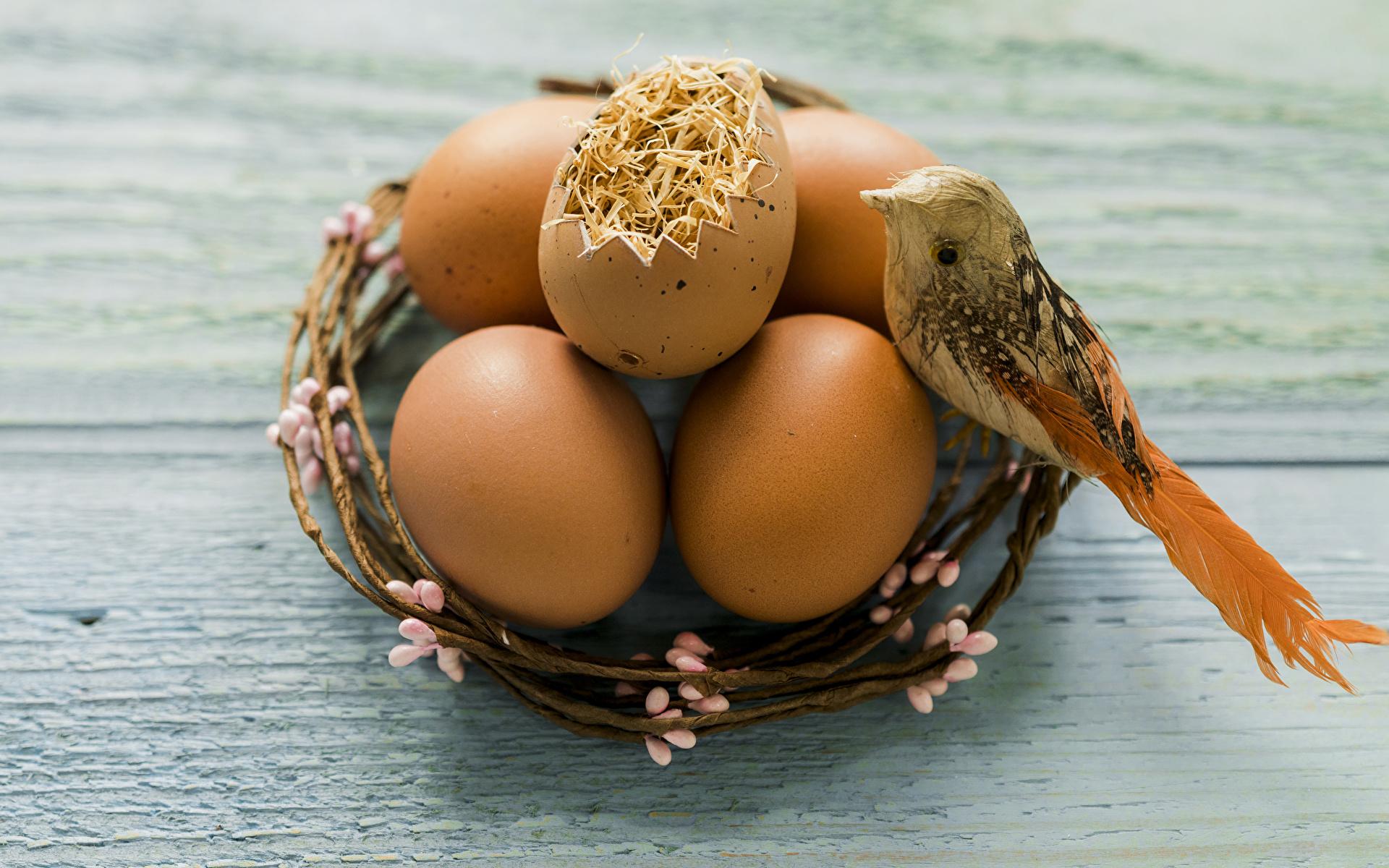 Фото Пасха Птицы яйцами гнезда Праздники Доски 1920x1200 птица яиц яйцо Яйца Гнездо гнезде