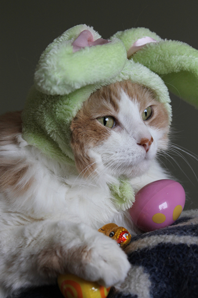 Картинки Пасха коты Яйца Шапки Морда Животные 640x960 для мобильного телефона кот Кошки кошка яиц яйцо яйцами шапка в шапке морды животное