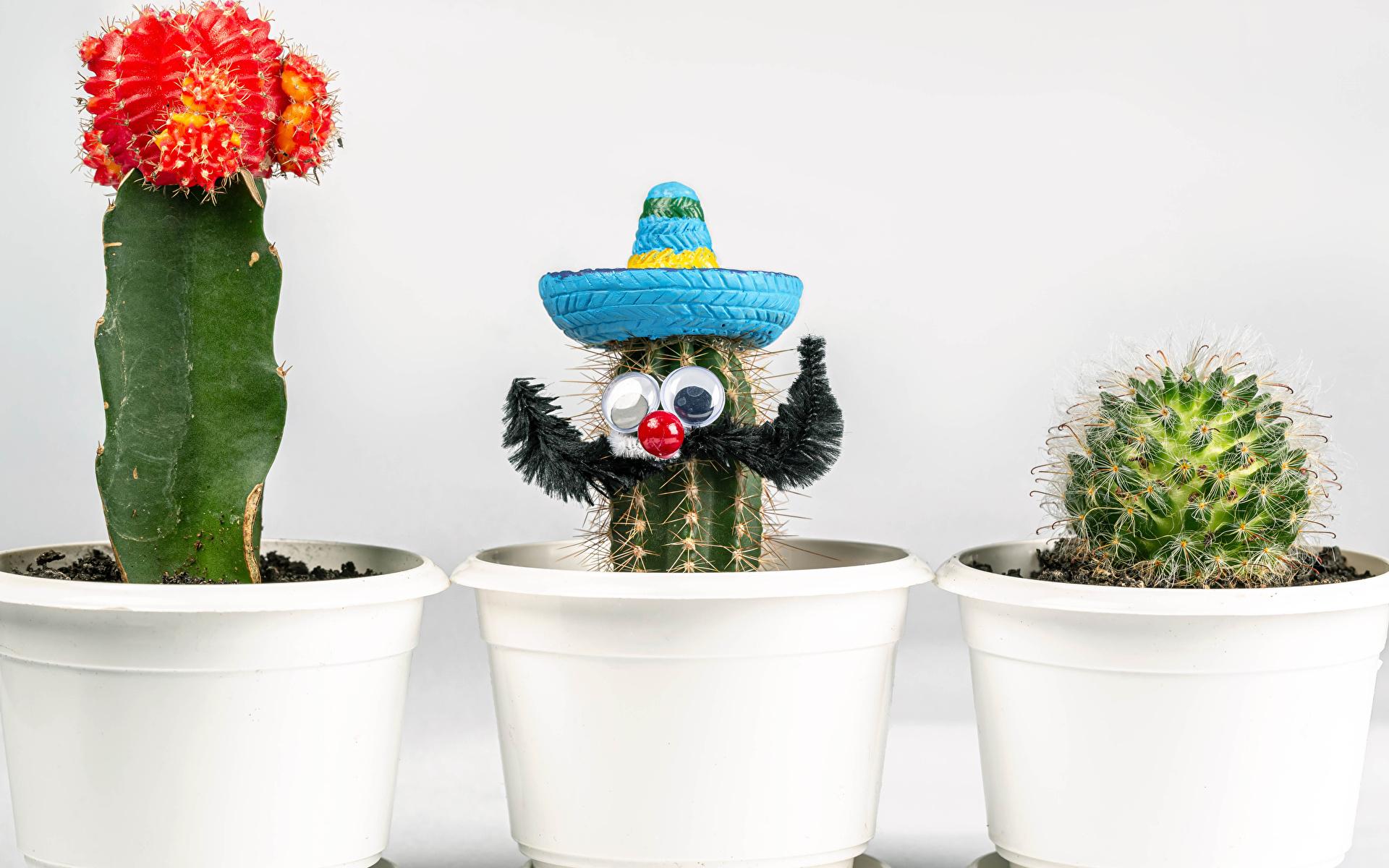 Фотографии шляпы Цветочный горшок Цветы оригинальные Трое 3 Кактусы Белый фон 1920x1200 Шляпа шляпе цветок Креатив креативные три втроем белом фоне белым фоном