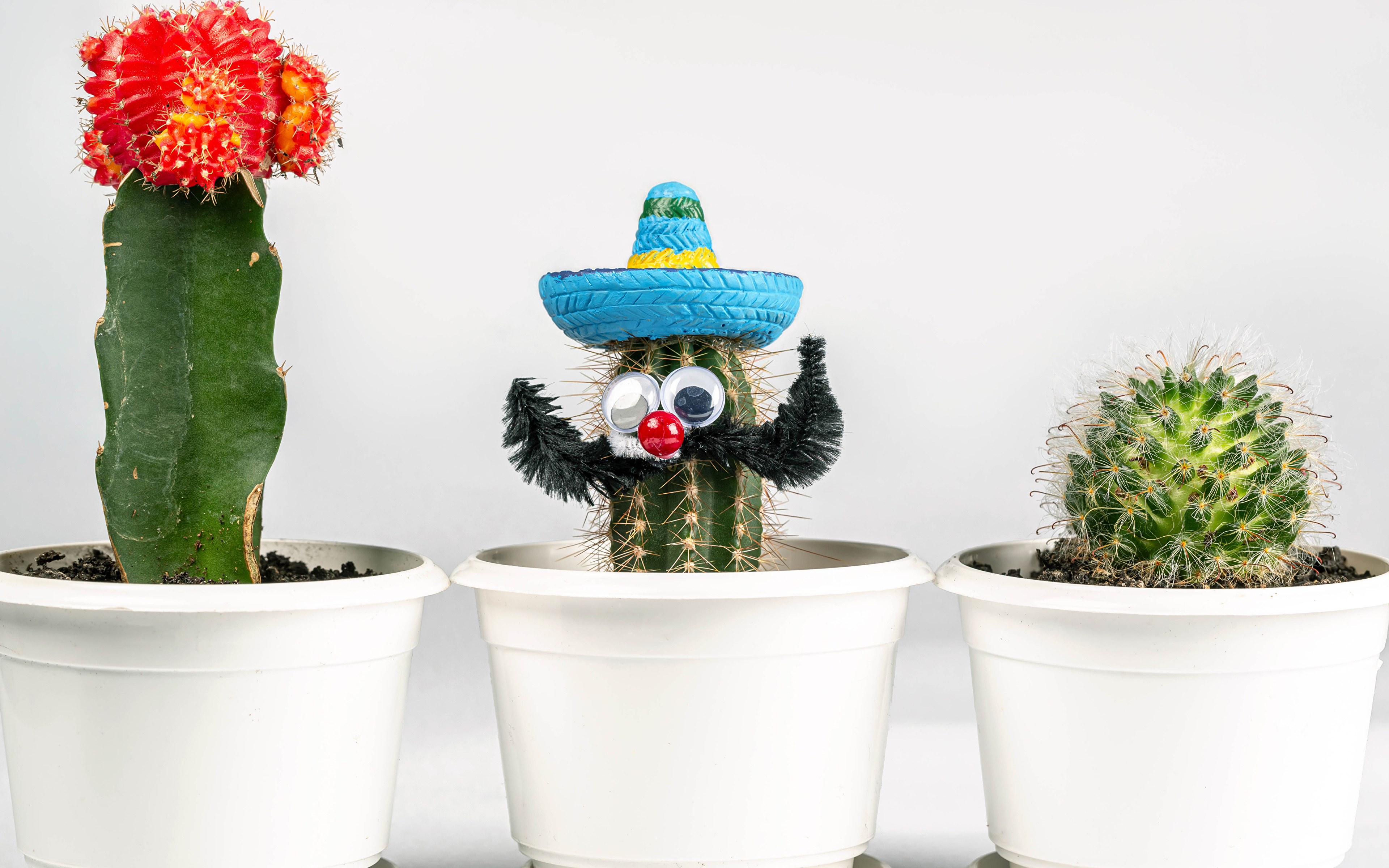 Фотографии шляпы Цветочный горшок Цветы оригинальные Трое 3 Кактусы Белый фон 3840x2400 Шляпа шляпе цветок Креатив креативные три втроем белом фоне белым фоном