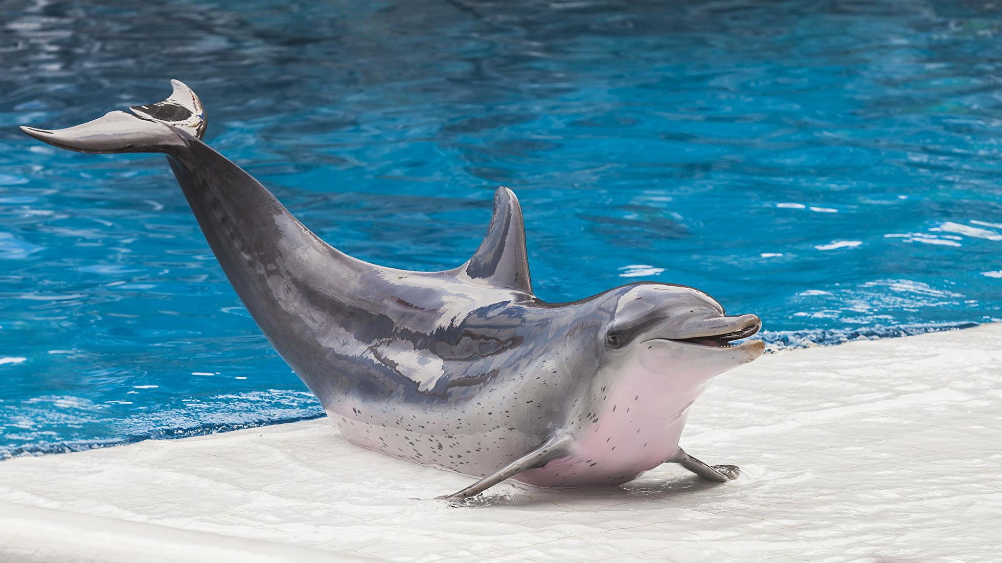 дельфин крупным планом без смс