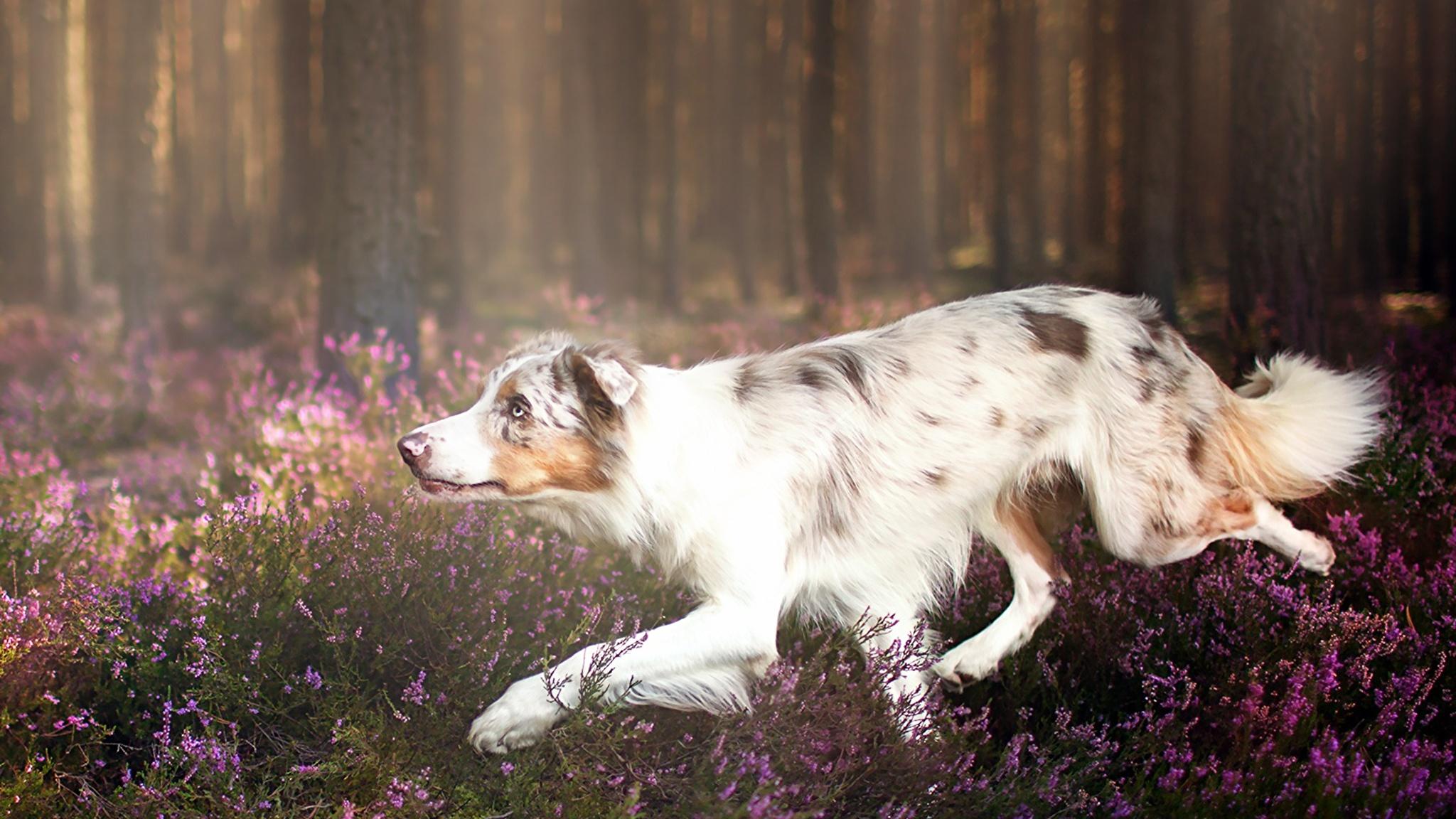 Собака бегущая язык лапы скачать