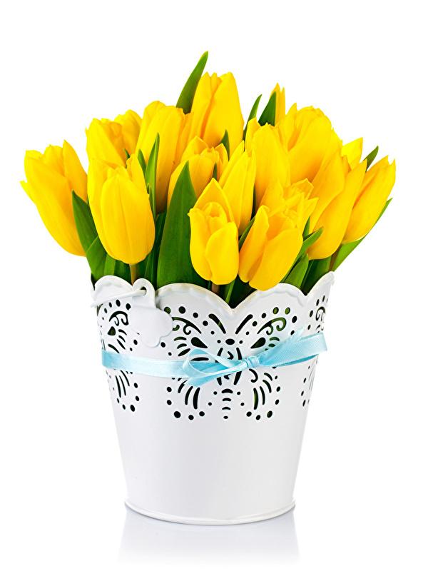 Фотография желтые Тюльпаны Цветы белом фоне 600x800 для мобильного телефона желтых Желтый желтая тюльпан цветок Белый фон белым фоном